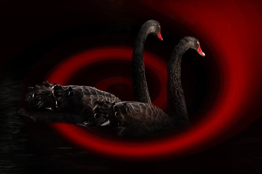 Is this truly BLACKSWAN-VID-19?