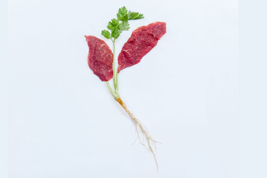 Future of Protein